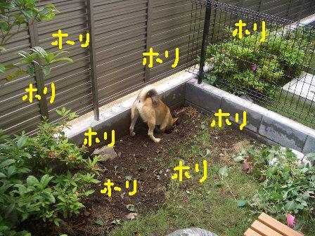 ichi24c.jpg