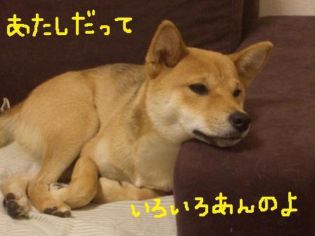 ichi24l.jpg
