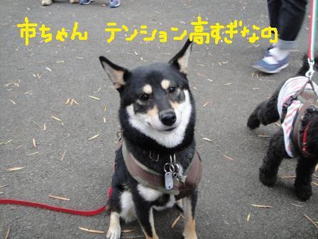 ichi36c.jpg