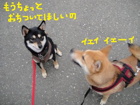 ichi36d.jpg