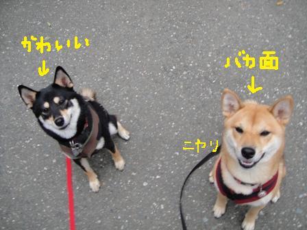 ichi36e.jpg