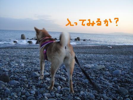 ichi37l.jpg