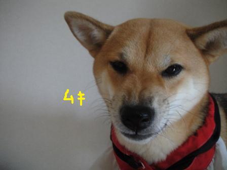 ichi38-c.jpg