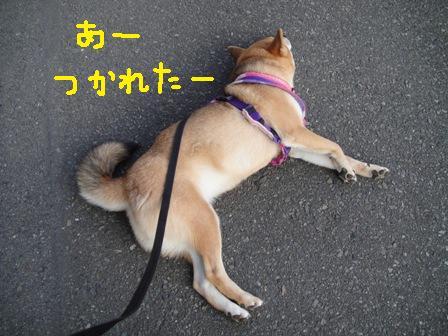 ichi43k.jpg