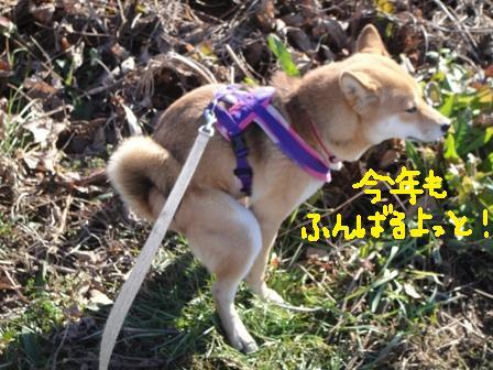 ichi46k.jpg