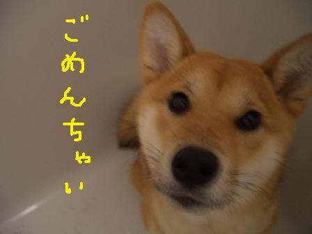 ichi8o.jpg