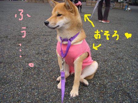 ichi9k.jpg