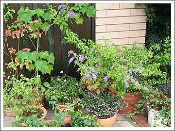 玄関の花その2