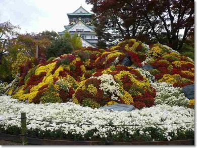 菊の祭典♪