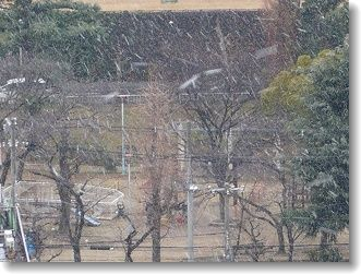雪ですぅ~♪