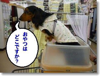 箱乗り~♪