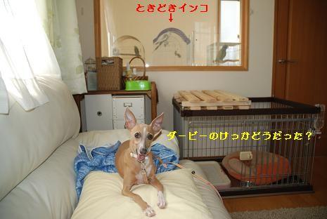 日本ダービー2