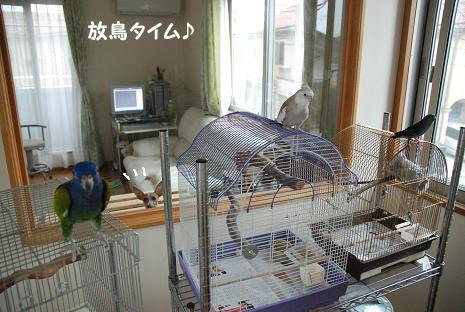 放鳥タイム1