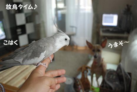 放鳥タイム2