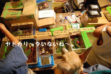 上尾夏祭り14