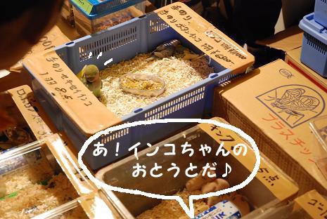 上尾夏祭り15