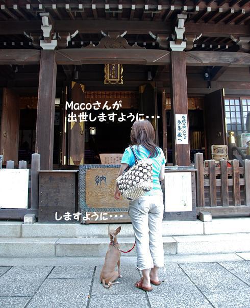 高麗神社6