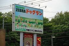 zebra18.jpg
