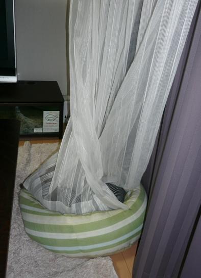 毛布代わりにされてるカーテン