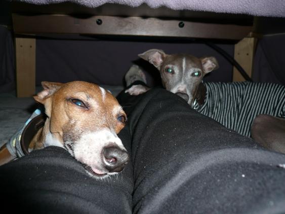 小型犬とは言え、足 しびれてきます。。