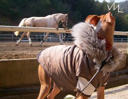 生まれて初めて見る馬さん