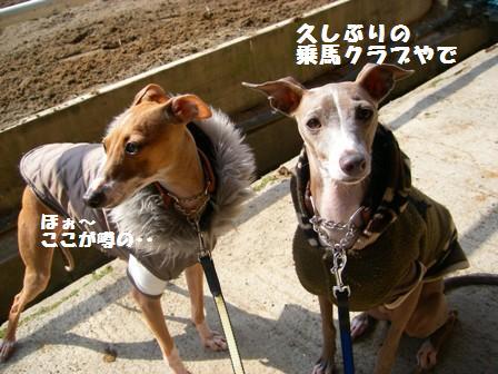 徳島県にある乗馬クラブです