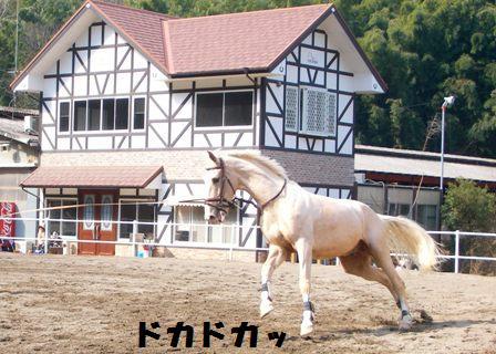 白馬じゃないです。淡いクリーム色してます。
