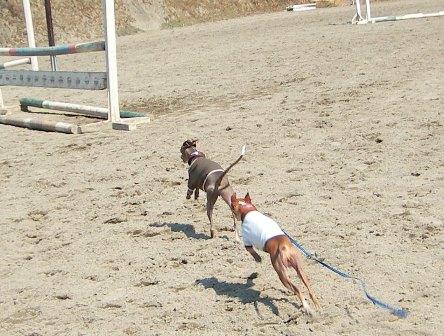 砂場で走ると、筋肉が鍛えられます!