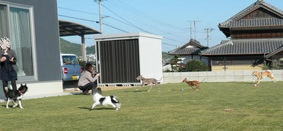 解き放たれる犬達