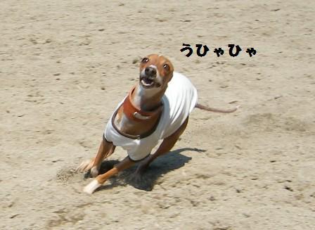 UMA(未確認生物)風