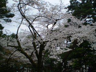 kenrokuen1.jpg