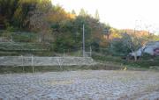 2008 11 19 hatusimo