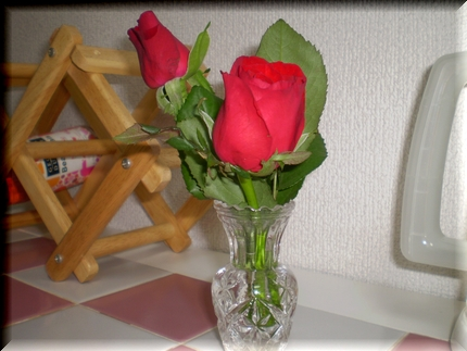Red Rose0331