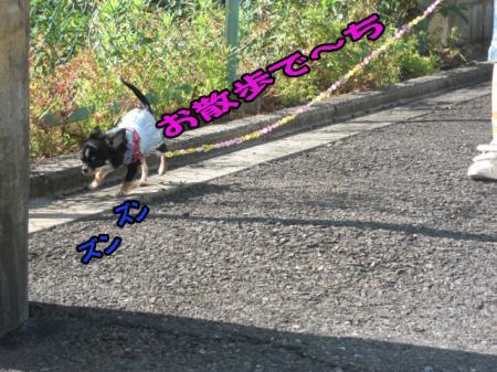 CIMG0157-001.jpg