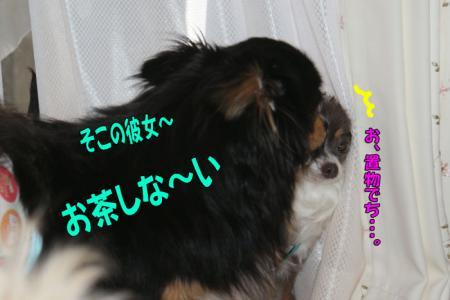 DSC00065-036.jpg