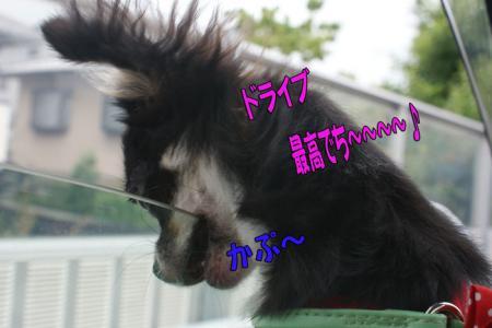 DSC00612-008.jpg