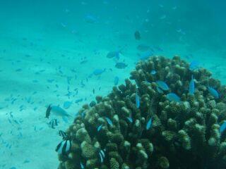 20100909コーラル熱帯魚の群れ