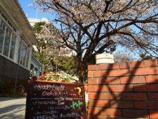 20120412神戸北野美術館の桜