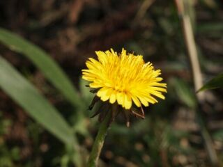 20120418フルーツフラワーパーク花
