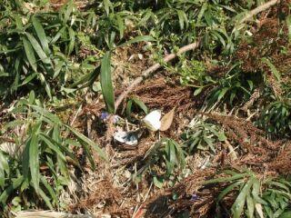 20120418フルーツフラワーパーク蝶