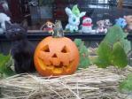 かぼちゃとタンゴ