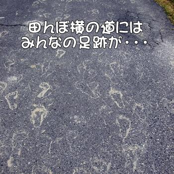 2008_05_17 187