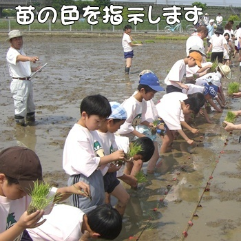 2008_05_17 065