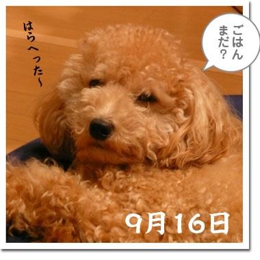 P12600272.jpg