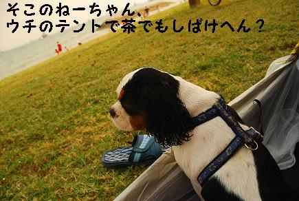 20090814_Goma1.jpg