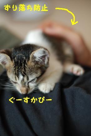 20090823_03.jpg