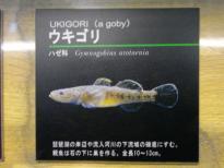 IMGP1039.jpg