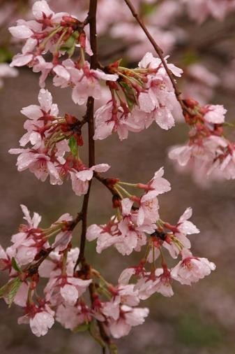 090414 春の高山祭 080