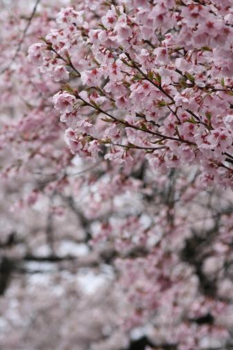 090414 春の高山祭 161