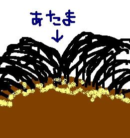 haegiwa1.jpg